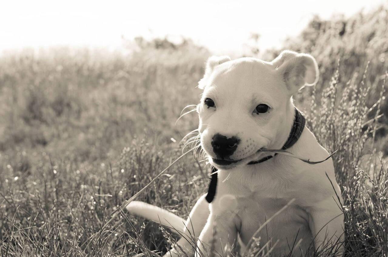 Hundehaftpflicht-Versicherung